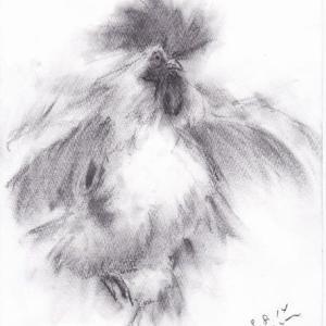 羽ばたくニワトリ