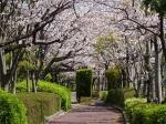 桜満開でも寒いものは寒い。