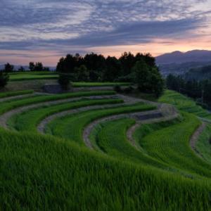 緑の絨毯 ~夜明け