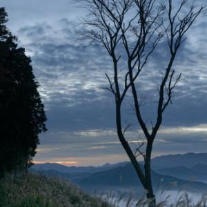 雲海 ~ススキの穂