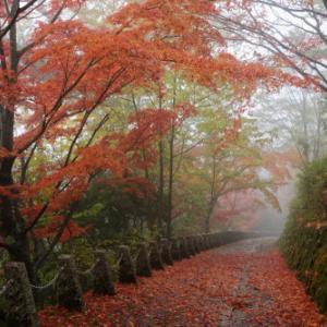雨の吉野山②