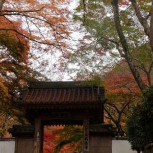 紅葉 ~雨の大威徳寺