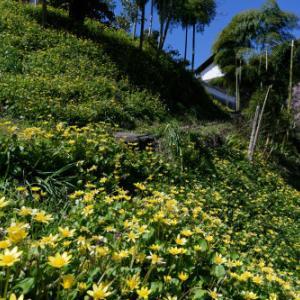 春色の小道