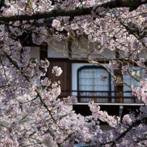 春色の岡寺