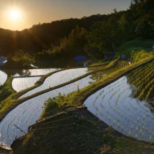 稲宿る夕景