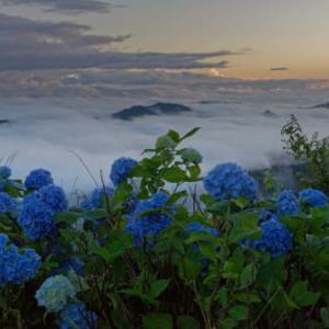 雲の上に咲く