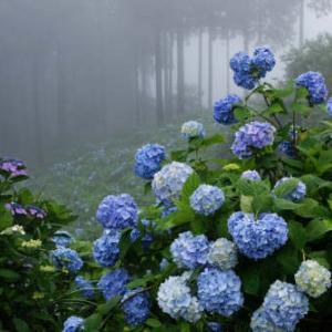 朝霧の花園
