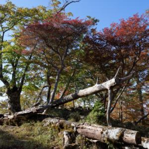 大台ケ原 ~シオカラ谷への道