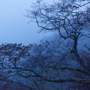 桜紅葉 ~霧の吉野①
