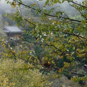 桜紅葉 ~霧の吉野②