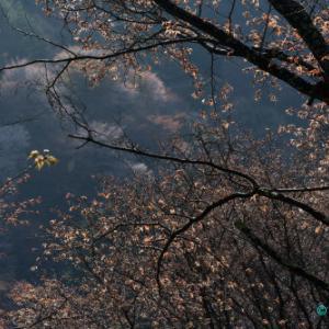 吉野の春③