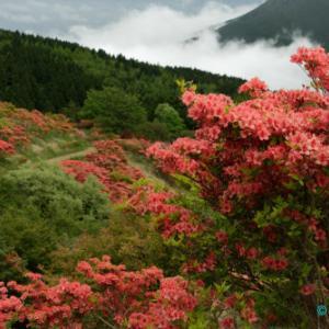 雲上の葛城山