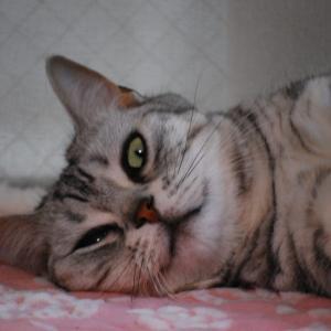 猫の機嫌を伺い「奥様のご機嫌をとる(^_^)」