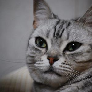 猫のダイエットを手伝い「奥様のご機嫌をとる(^_^)」