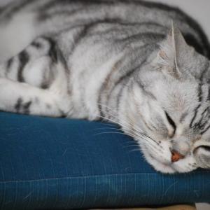 HSP(超敏感)な私は猫に癒やされている