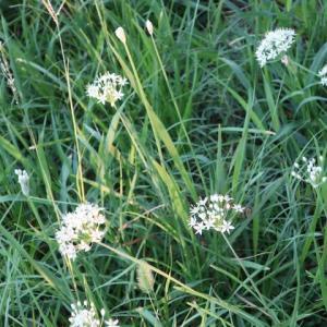 秋打上川治水緑地・秋に咲く三種類の花