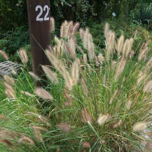 奨忠壇公園の奥に佇む韓屋は自然派レストラン「タダメトゥル」