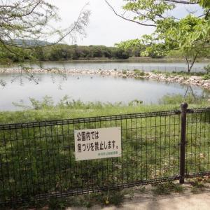 #277 釣り禁止の池で鯉を持ち帰る法 ~「昆陽の御池」~