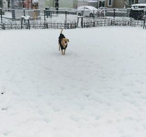 雪降ったどぉ~