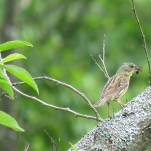 塘路湖の鳥さんたち