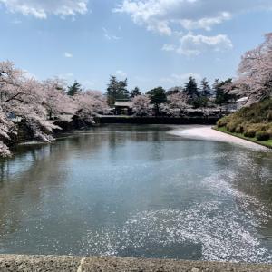 米沢 上杉神社(^▽^) 桜満開♪
