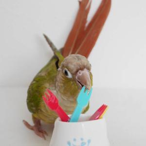 インコ・小鳥飼育に餌選びはとても重要!!毎日の食事は健康の源
