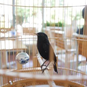 インコに竹製の鳥かごは使えないのか?