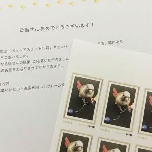 郵便局「ペットアスリート年賀」でオリジナル切手当選!