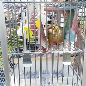 インコの電車賃は有料?無料?JR手回り品規則「少量の小鳥」の謎!