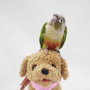 鳥の色は犬猫に比べてなぜカラフルなのか