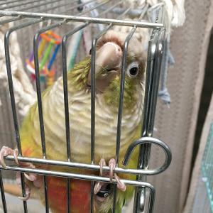 鳥を飼っている人は世の中にどのくらいいる?鳥人口について