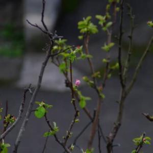 2021年03月09日、朝の桜島