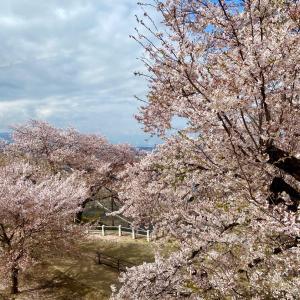 車窓からお花見!青春18きっぷで行く、春の松本 温泉旅行 2021