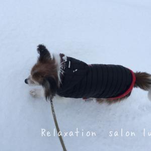 雪降りましたね ディオンと散歩