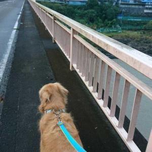 いつもと違う橋~🚶🐾