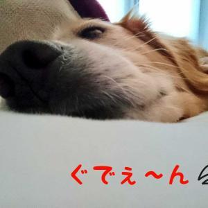 Kっちゃんのベッドでは…ヾ(≧∀≦*)ノ〃
