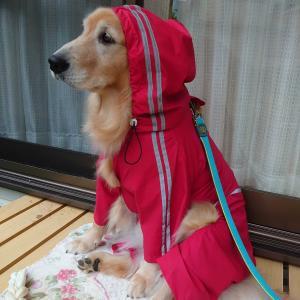 今日も、また雨…☔