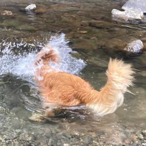 泳げる場所みぃ〜け🙌🐶