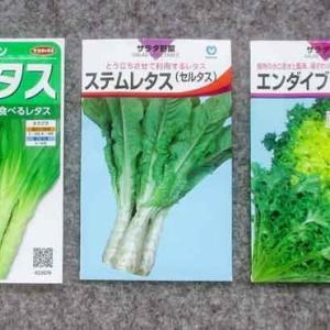 茎を食べるレタスです。