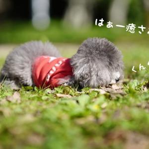 山田池公園へお散歩