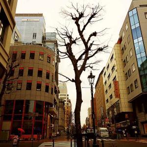 2021年1月28日(木)、小雨模様の桜木町→馬車道を歩いて来る、ほか