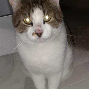 野良猫のきっちゃん