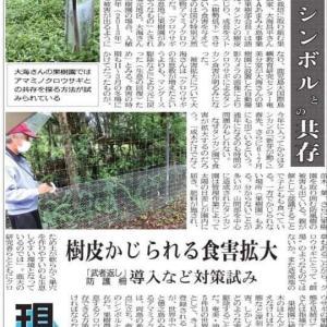 奄美大島世界遺産登録~猫達を助けよう~