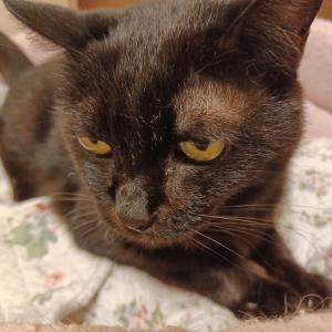 猫の爪の悩み