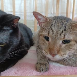 高齢猫達へのご支援のお願い
