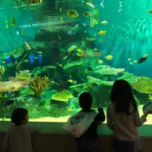 【お出かけ】しながわ水族館