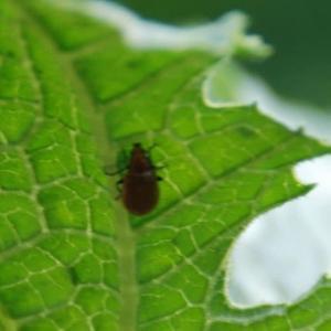家庭菜園の害虫予防