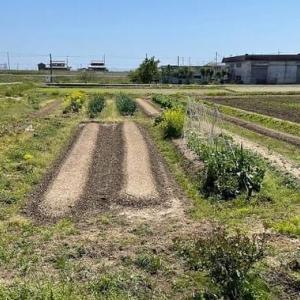夏野菜植え付け(第1弾)