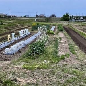 夏野菜植え付け準備(その2)
