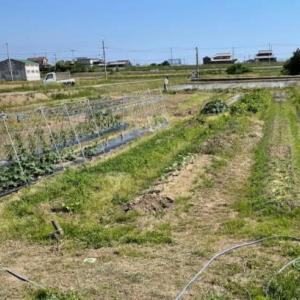 夏野菜植え付け準備(最終)